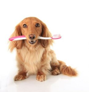 February is dental health month for pets.